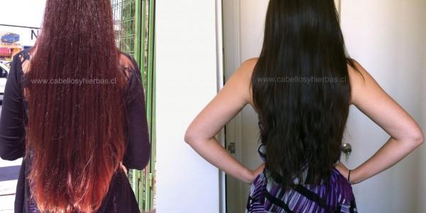 La máscara para los cabellos la corteza de la caída de los cabello las revocaciones